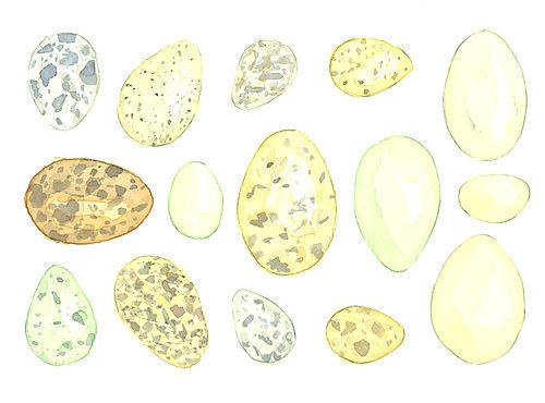 Louisejennison_eggs3