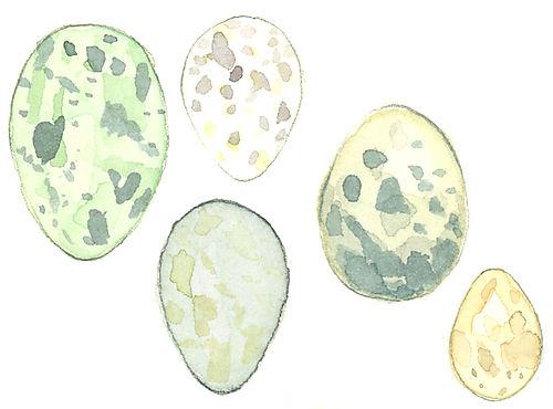 Eggs_lj5