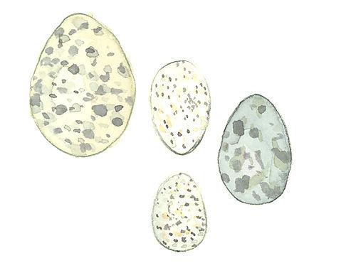 Eggs_lj3