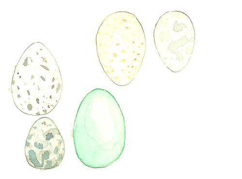 Eggs_lj4
