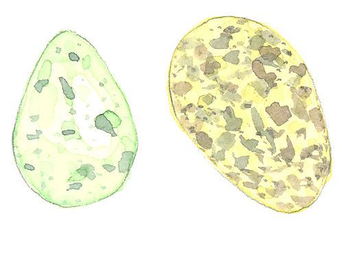 Eggs_lj7