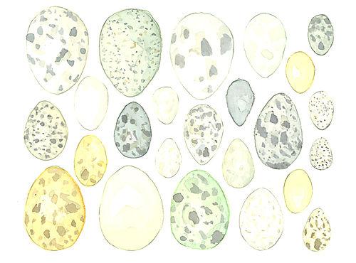 Louisejennison_eggs1