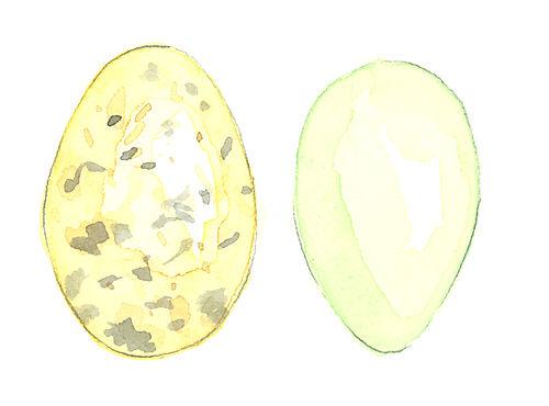 Eggs_lj8