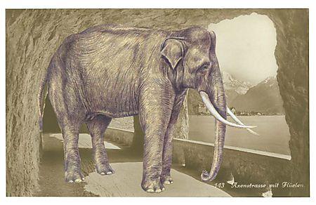 Gracia_elephant1