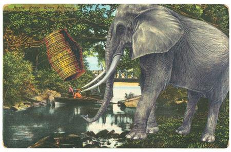 Elephant_exposure
