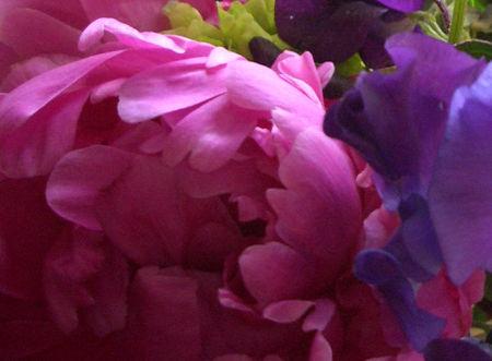 Flowers_abundance3