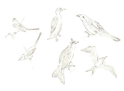 100_birds 1