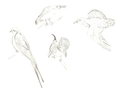 100_birds 2