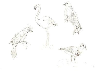 100_birds 3