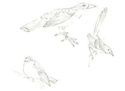 100_birds 4