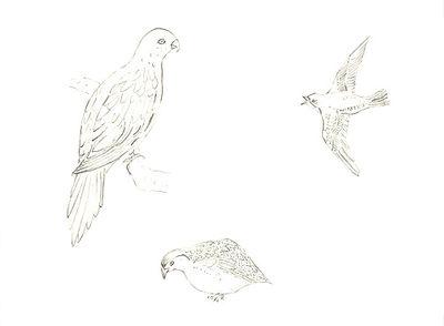 100_birds 5