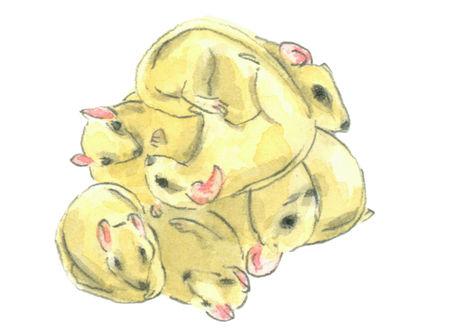 Rats lj