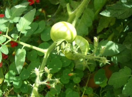 2009_tinyview_garden1