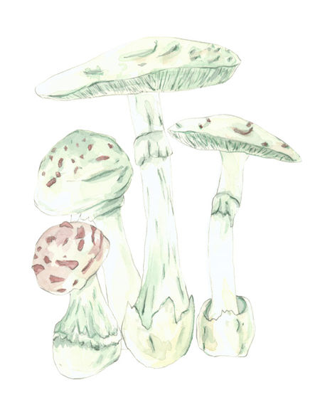 Lj_mushroom_3