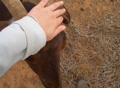 Goats_03
