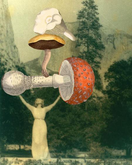 Gracia_haby_mushroom1