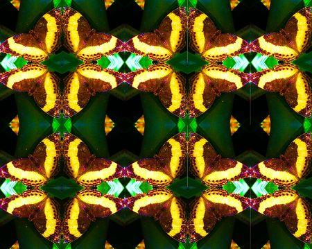 Jurate_Sasnaitis_rainbow of butterflies02