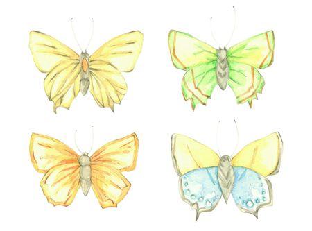 Butterfly_jennison_1