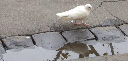 White_bird_stroll_2