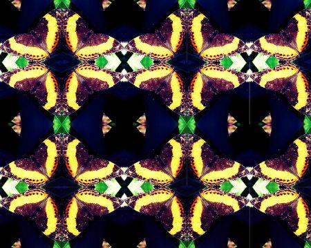 Jurate_Sasnaitis_rainbow of butterflies08