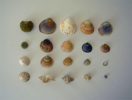 E_shell2