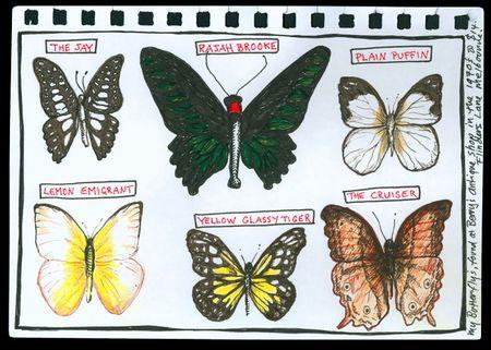 Butterfly_elaine
