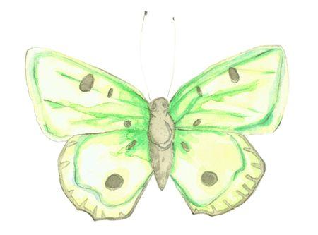 Butterfly_jennison_2