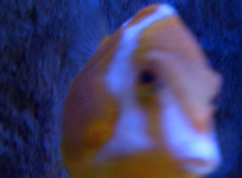 Zoo_underwater03