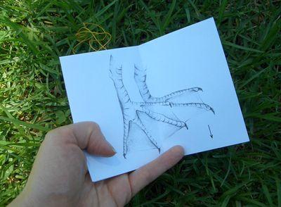 Folded_australian_pelican_03