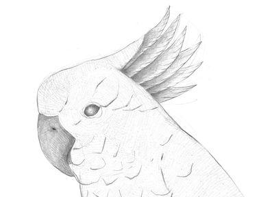Jennison_birddrawing1