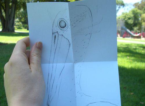 Folded_australian_pelican_02
