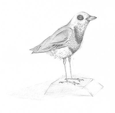 Jennison_smallbird