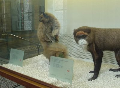 Natural_history_museum00