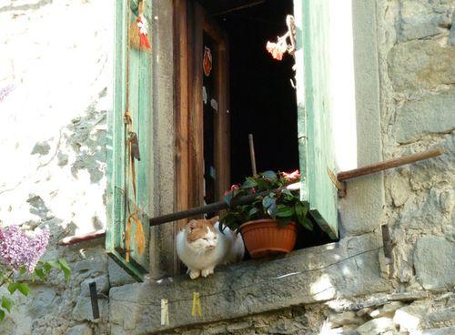 Italian_animals03