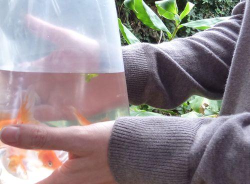 Fish_pond_04