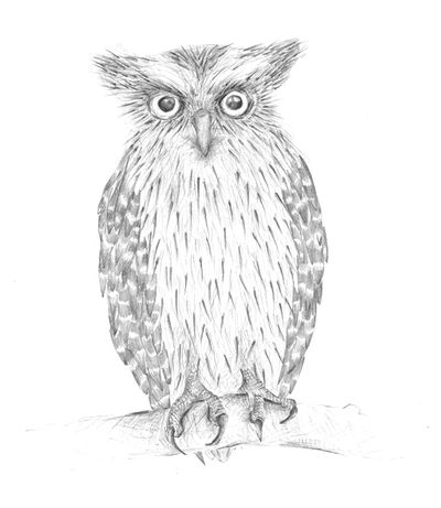 Jennison_owl