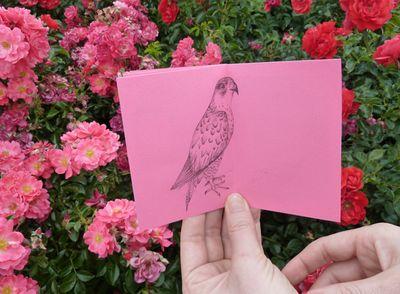 Proud_birds_09
