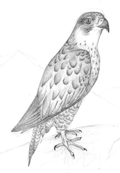 Jennison_proud_bird2