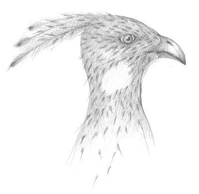Jennison_bird_head