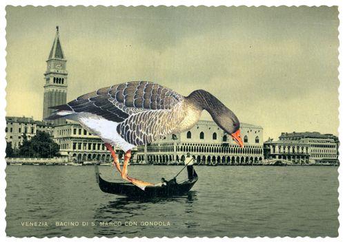 Venezia_gracia_haby