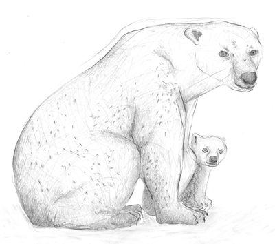 Jennison_polar_bear_02