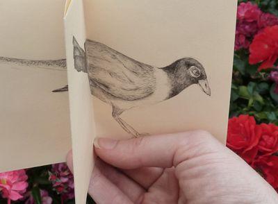 Birds_in_print_04