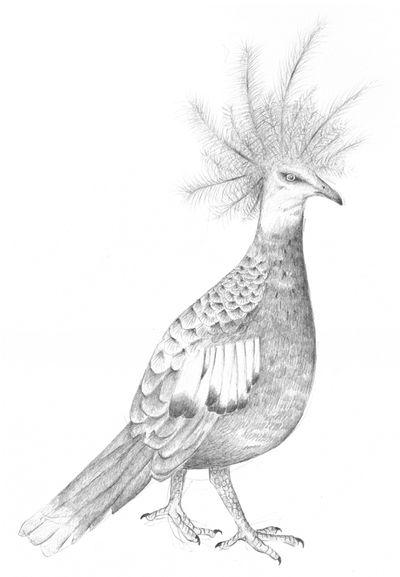 Jennison_proud_bird
