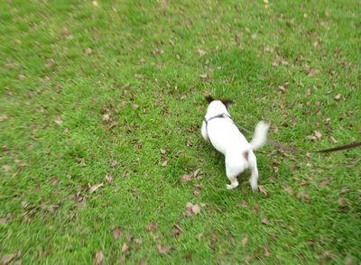 Percy_stroll
