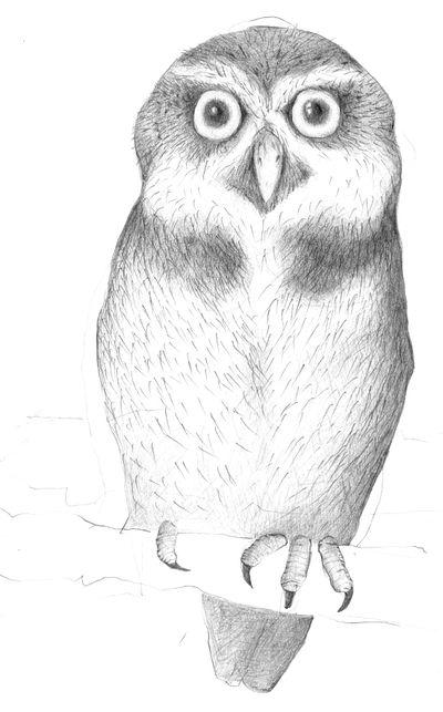 Jennison_spectacled_owl