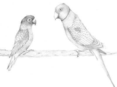 Jennison_parrot08