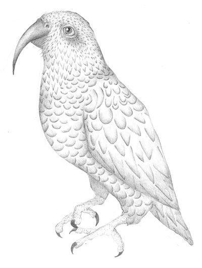 Jennison_parrot02