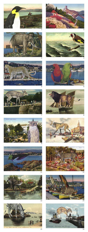Haby_postcardcollage_options