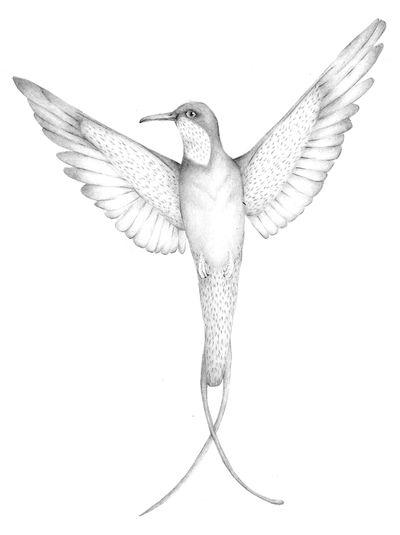 Jennison_hummingbird
