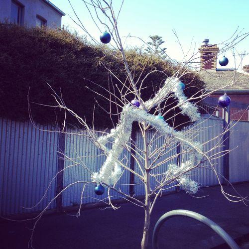 December_localchristmastree
